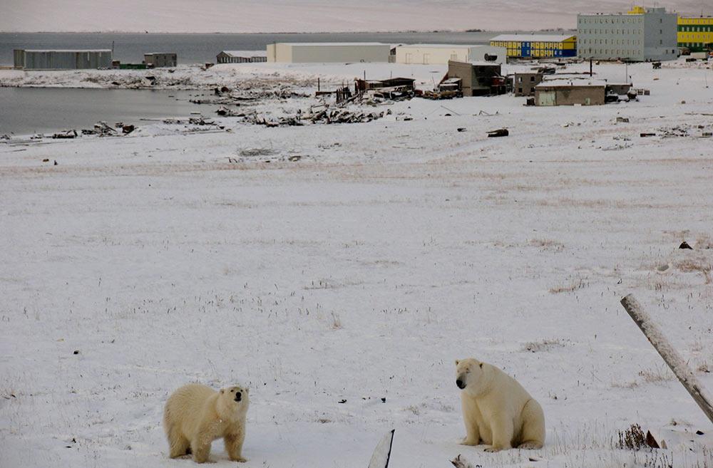 俄新地岛驻军生活照曝光 积雪奇厚与熊共舞