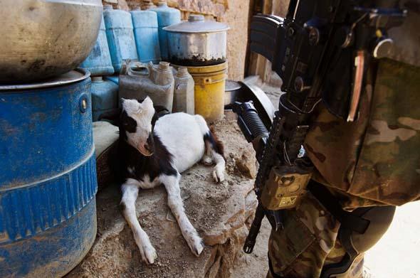 那些卷入战争的可爱小动物们